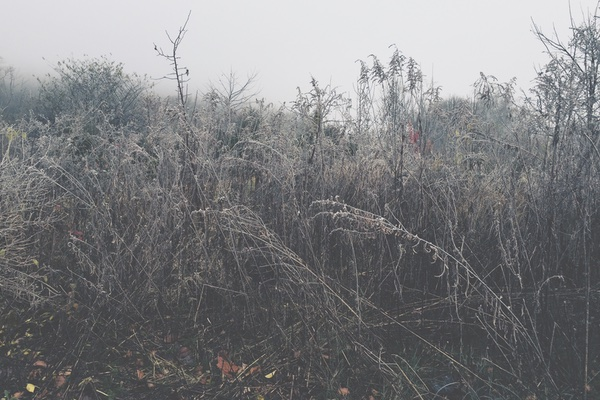 iPhoneography: Hoarfrost Series