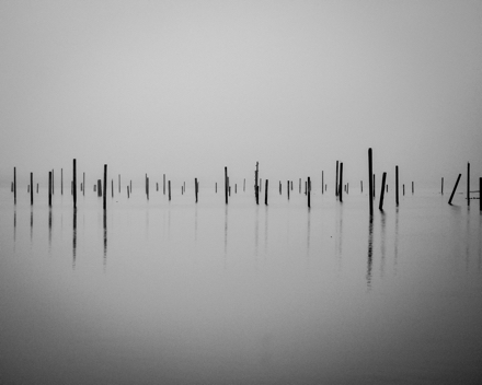 A black and white photograph of thin posts rising from still water