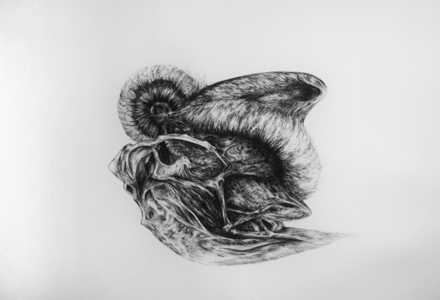 A charcoal drawing of an Anthropocene fossil