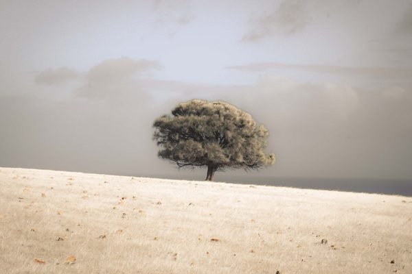 A photograph of a lone tree in the middle of a savannah