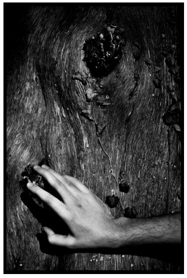 A black and white photograph of a hand touching a knot in a tree