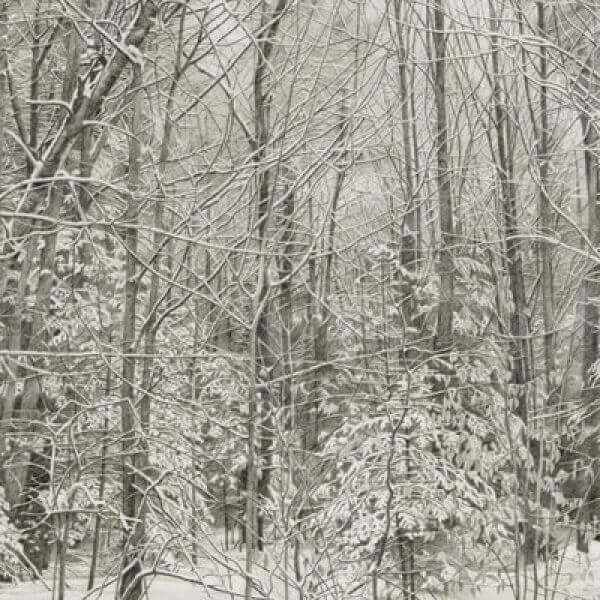 A graphite drawing of the woods after a snow