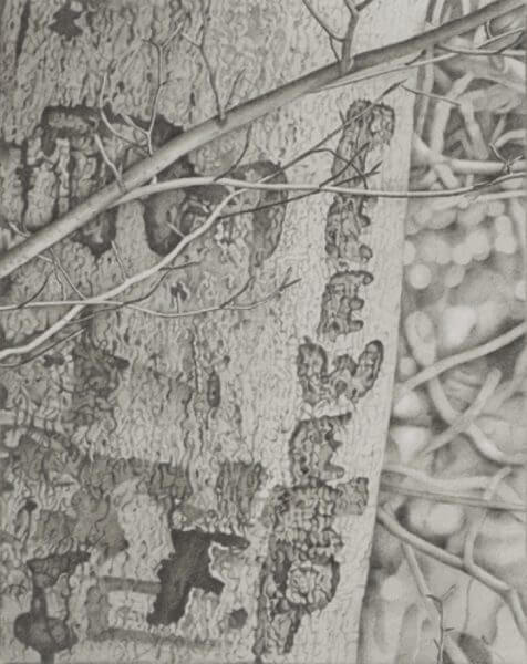"""Black and white graphite drawing of the words """"pee wee"""" carved into a tree"""