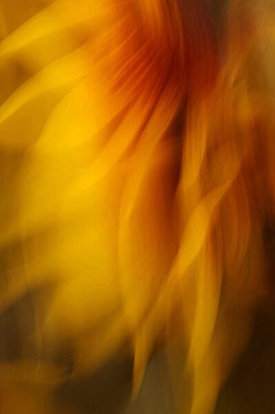 David Quinn, a colorful abstract photograph of a flower.