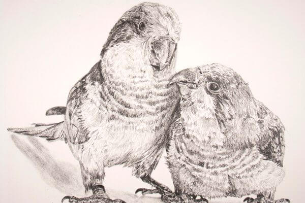 Graphite drawing of a realistic bird couple