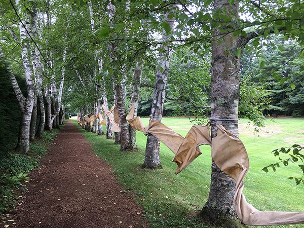 An installation of a cloth woven between trees in a park