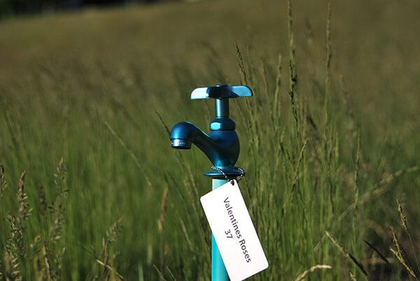 A bright blue water faucet in the middle of a field of grass