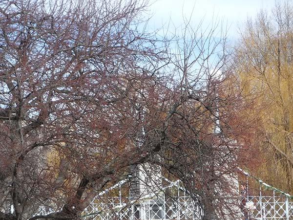 A photograph of the bridge in the Boston Public Garden