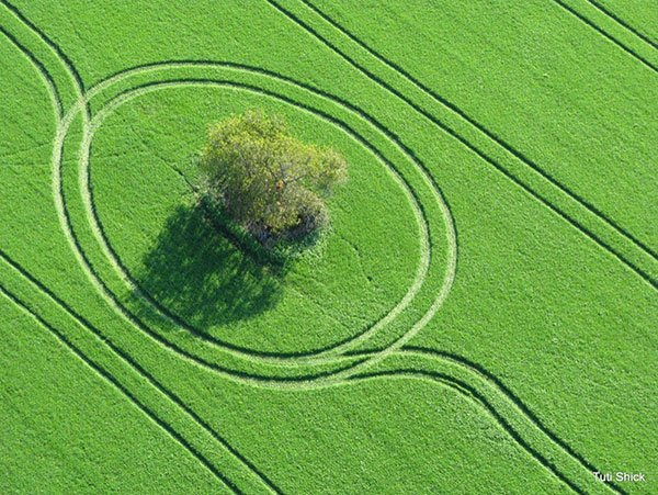 Aerial photography of a tree in a field of grass