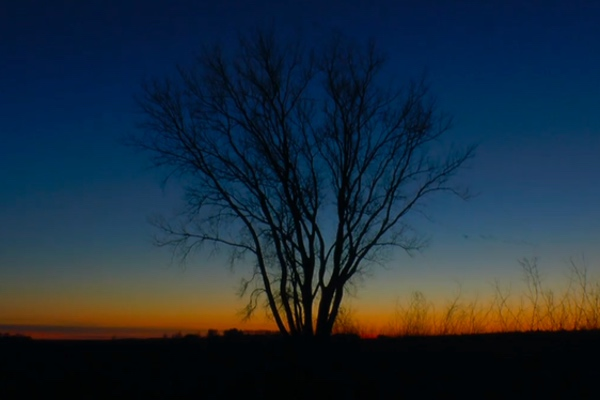 A video still of a dead tree backlit by sunrise