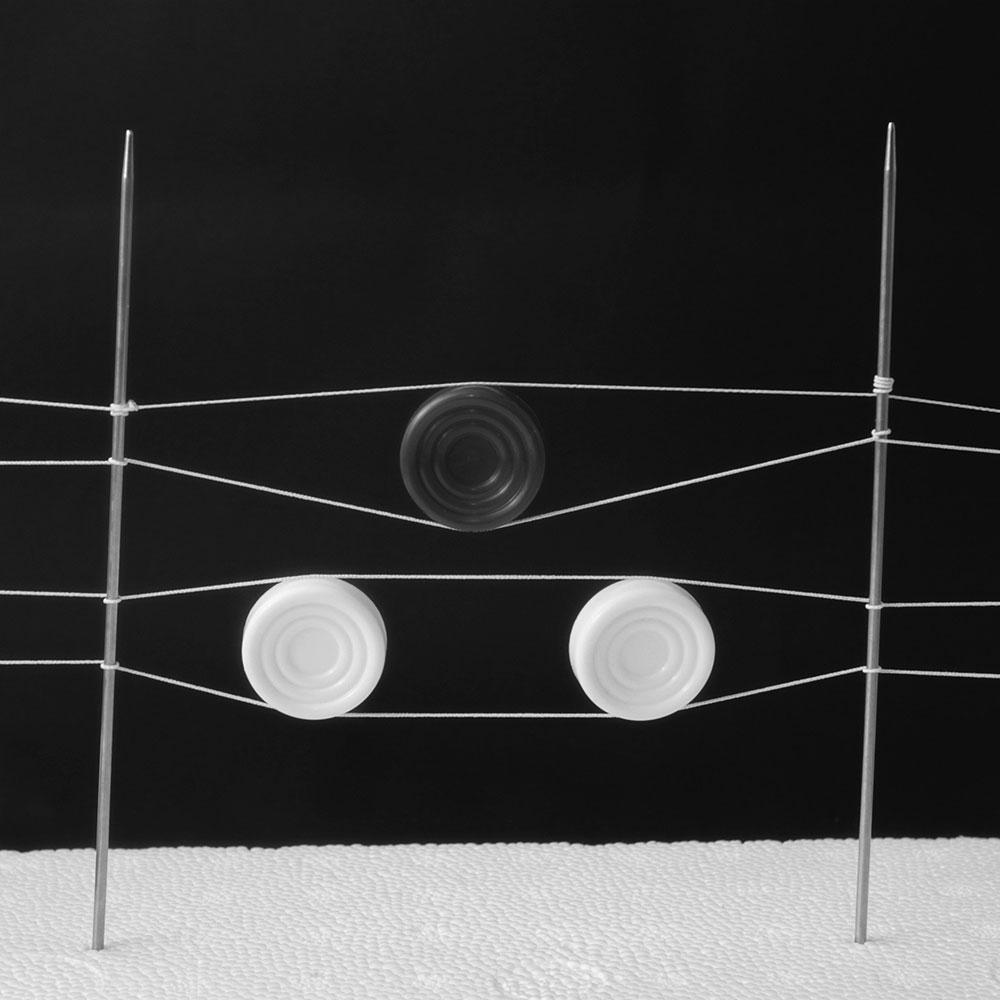 Isolation: digital photograph by Talyana Vyaltseva